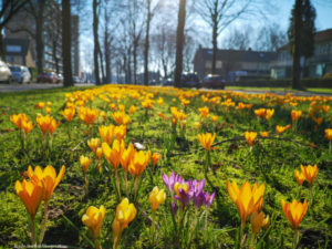 Lente in Postelse Hoeflaan